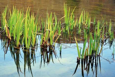 La fitodepurazione: come depurare l'acqua a zero emissioni