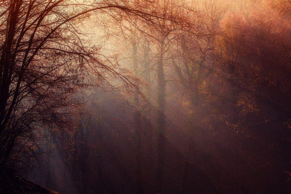 l'autunno che va via